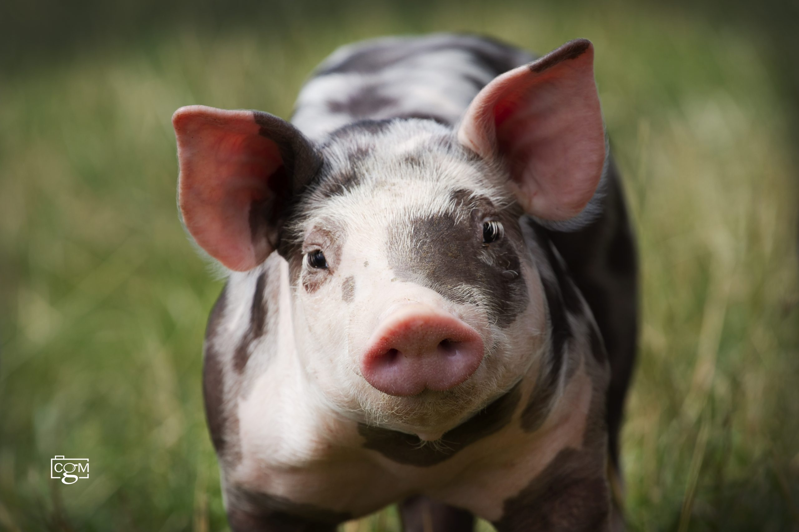 It's official – we're pig farmers!